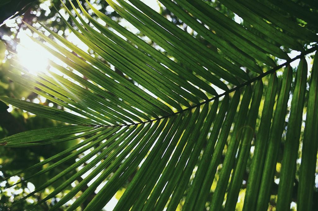 Palmtakken